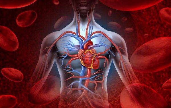 Higiene Bucal e Doenças Cardíacas